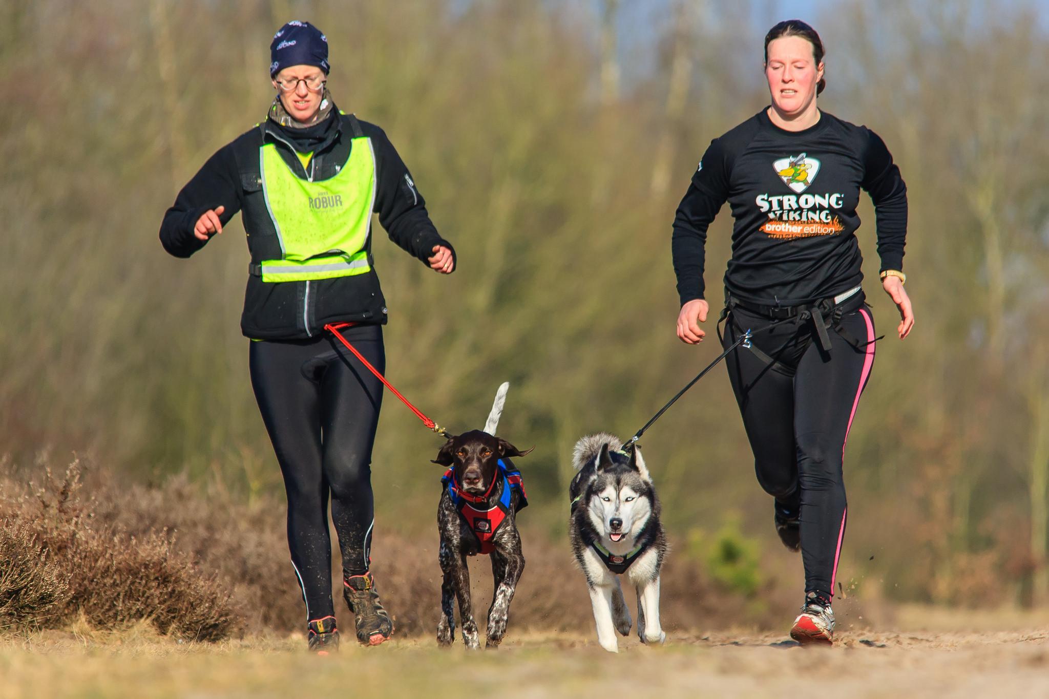 trail dog race